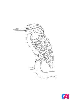 Coloriage Martin-pêcheur