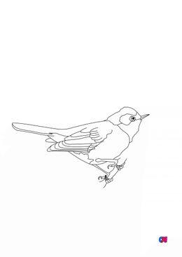 Coloriage d'oiseau - Fauvette grisette