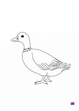 Coloriages d'animaux - Canard 1