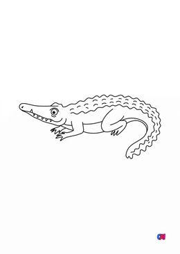 Coloriages d'animaux - Un crocodile