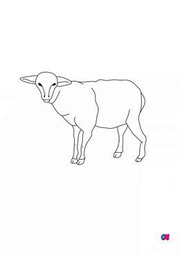 Coloriages d'animaux - Mouton