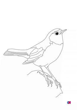 Coloriage d'oiseau - Rougequeue à front blanc
