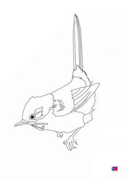 Coloriage d'oiseau - Fauvette pitchou