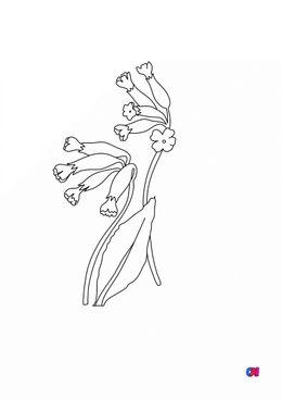 Coloriage de fleurs - Coucou