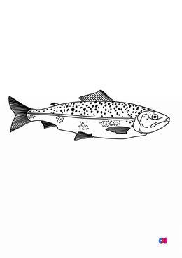 Coloriages d'animaux - Saumon adulte